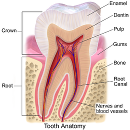 Why dental care gets neglected