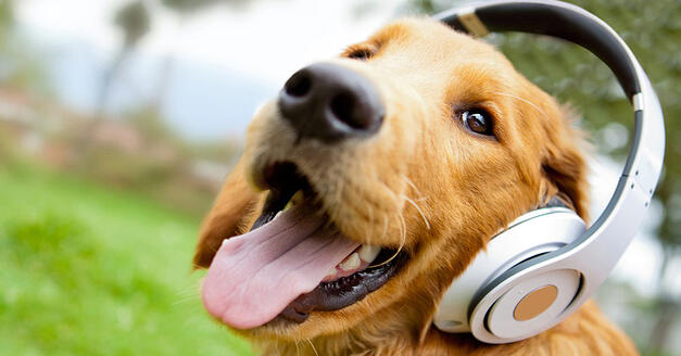 copy Cute dog listening to music with headphones - outdoors